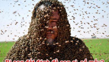 Bị ong đốt đánh đề con gì, số mấy?