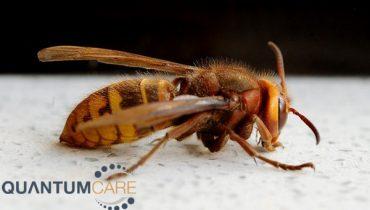 Top 9 Các Loại côn trùng độc, nguy hiểm nhất thế giới