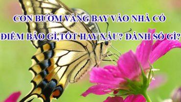 Con bướm vàng bay vào nhà có điềm báo gì, tốt hay xấu? Đánh số gì?
