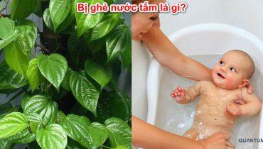 Trẻ Bị ghẻ nước tắm lá gì? Cách chữa bệnh ghẻ dân gian