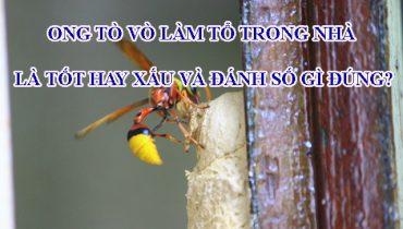 Ong tò vò làm tổ trong nhà là tốt hay xấu và đánh số gì đúng?