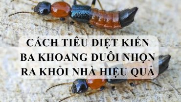 Cách tiêu diệt kiến ba khoang đuôi nhọn ra khỏi nhà hiệu quả