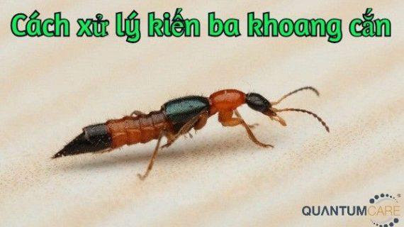 Cách xử lý kiến ba khoang cắn, vết cắn nhanh khô không bị lây